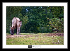 Falknerei Potzberg - Wild Park - Mother Horse and Her Baby (MLechuga Photography) Tags: life street new old city travel blue trees light boy sunset red portrait sky people blackandwhite bw italy music orange usa sun white mountain lake snow man black mountains flower macro tree green london art fall cars nature colors girl rock architecture night clouds digital forest canon reflections germany landscape photography eos is photo dof prague action bokeh eu sigma wideangle chrome 7d summertime usm dslr canoneos hdr kaiserslautern intheair 2012 2011 eos7d canoneos7d monsieuri