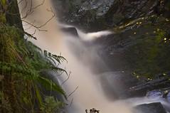falling water (Tony Shertila) Tags: england water waterfall europe force britain yorkshire foss milky longshutter northyorkshire yorkshiredales ingleton riverdoe rivertwiss mygearandme