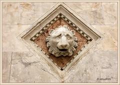 Detalle de la catedral de Siena (MILA@125) Tags: canon italia catedral siena toscana mila125