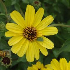 110319_0727.jpg (Weeding Wild Suburbia) Tags: park animal gardens insect publicgardens spnp