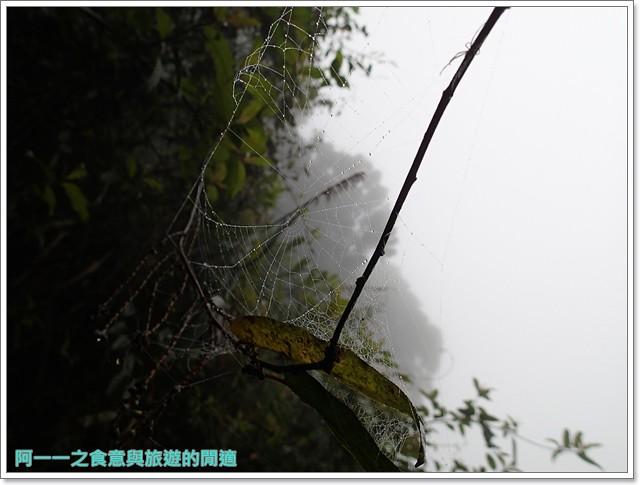南投溪頭自然教育園區台大image079