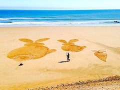 Sand Bunnies on Aberdeen beach. (LynG67) Tags: beach aberdeen