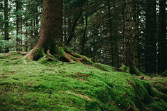 Uneven (pauses) Tags: trees tree nature norway forest woodland outdoors moss europe exterior no ground cover bergen scandinavia hordaland 2016 colourimage