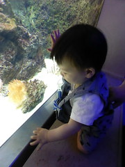 antwerp_4_111 (OurTravelPics.com) Tags: max coral zoo aquarium with antwerp lionfish