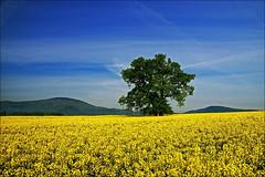 Spring (witoldp) Tags: mountains wiosna beskidy polan beskid lipowa skrzyczne ywiecki pietrzykowice laski sotwina
