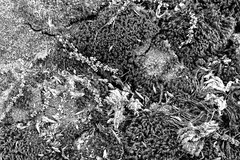 Moss and lichen (Richard-) Tags: moss hiking lichen macricostaspreserve fujix70