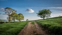 Follow the cloud (paulnadin) Tags: trees nikon path d750 nikkor f4 lr lightroom 24120mm