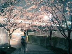Through the spring underpass (taketan (Takeshi Tanaka)) Tags: city rain japan train tokyo spring cityscape  cherryblossom sakura cherryblossoms