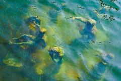 Waving, not drowning (TheNewPeterChapman) Tags: sculpture art water waves underwater jasondecairestaylor