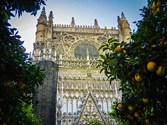 Oranges of Seville (Colormaniac too) Tags: travel art architecture sevilla spain cathedral gothic seville unescoworldheritagesite oranges andalusia magnificent cathedralofsaintmaryofthesee