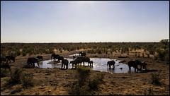 _SG_2016_05_Namibia_0011_IMG_1530 (_SG_) Tags: auto africa park trip elephant tree water car nationalpark wasser solitude desert hole national afrika giraffe ausflug elefant namibia herd baum strauch etosha watering wateringhole elefanten 2016 einde giraffen etoshanationalpark standpost wasserstelle etoshapark elefantenherde giraffenherde giraffesherd