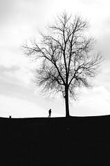 I went out for a walk (fernando_gm) Tags: people blackandwhite bw tree blancoynegro copenhagen denmark arbol person persona nikon simplicity minimalist dinamarca copenague copenhague minimalista airelibre d7000