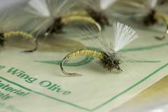 Blue wing olive Klinkhmers (Masi Hast) Tags: flyfishing flytying dryfly