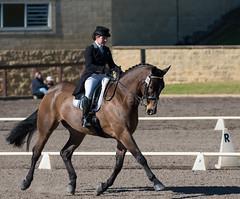 160701_YR_Champs_3393.jpg (FranzVenhaus) Tags: horses performance sydney australia competition event nsw athletes aus equestrian riders dressage siec