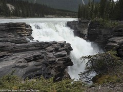 Athabasca Falls (David Minty) Tags: ca canada waterfall jasper alberta landform