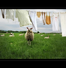 Laundry in Spring (h.koppdelaney) Tags: life green art wet field grass digital photoshop fun spring sheep symbol flock humor picture philosophy humour laundry smell mind cloth clotheslines metaphor washing wsche psyche symbolism fragrance psychology duft schaf frhlingsboten frische geruch frhlingsgefhle koppdelaney
