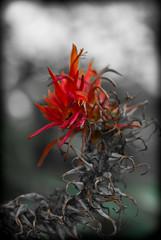 Playing with macro - Royal Botanic Gardens (natalieingram) Tags: flowers autumn flower macro garden iso200 sydney f28 botanicgardens royalbotanicgardens tamronspaf90mmf28 1250sec pentaxk10d macro90mm natalieingram 20120331131100igp5161pef