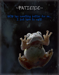 """Hang In There"" (inspiredbytimephotography) Tags: life inspiration macro texture closeup canon outdoors eyes waiting stuck god wildlife alabama naturallight amphibian frog christian quotes critters inspire treefrog patience prattville thoughtprovoking autaugacounty inspirationalquotes prattvillealabama canoneos60d pictureswithquotes inspiredbytimephotography"