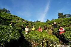 Group Photo (2121studio) Tags: nature nikon ali malaysia indah cameronhighlands kuantan alam malaysianphotographer drali bohtea sgpalasteaplantation 2121studio kuantanphotographer pahangphotographer ciptaanallahswt 0139342121 nubleebinshamsubahar