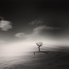 Solitude (A Pattern in Entropy) Tags: george solitude surrealism surreal christakis alwaysexc absolutegoldenmasterpiece