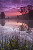 Dawn Over The Misty Lake (Si Photography) Tags: trees red sky cloud sun mist lake tree water grass misty sunrise landscape dawn branch twig rise flickrduel