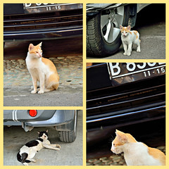 automotive models wannabe (the_orange_girl) Tags: cats car cat indonesia model nikon critter mobil automotive kucing odc d5100
