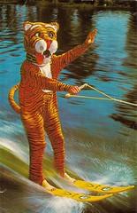Cypress Gardens (1981) (matthunterross) Tags: garden florida postcard tiger cypress waterski winterhaven