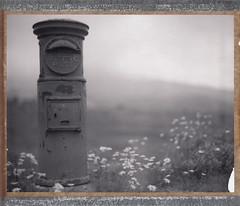 Post BOX (graflex45) Tags: bw flower monochrome vintage polaroid post bokeh anniversary large instant expired graflex type54 speedgraphic 7inch peelapart 4×5 aeroektar 178mm