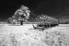12   11   10   ... (maxelmann) Tags: horse germany ir wiese 11 leipzig fisheye tokina sachsen infrared 12 pferd baum 10mm infrarot galopp pferderennbahn kanaltausch woodeffekt maxelmann tokinaatx1017mm pferderennbahnscheibenholz