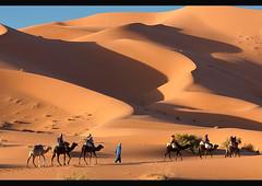 camel trekking in the Sahara at Erg Chebbi, Morocco (jitenshaman) Tags: africa travel tourism sahara animal trekking trek sand desert dunes adventure safari camel morocco beast destination arid bactrian sanddunes merzouga ergchebbi worldlocations
