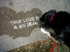 TRUE LOVE PUP (cool-baby) Tags: guelph