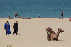 Beach Camel (J.Abadie) Tags: beach canon rebel mediterranean camel morocco camels tangier 2012 t3i