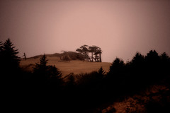 untitled (christopher drake (gone awhile)) Tags: trees light landscape florence windswept ethereal dreamy delicate sanddunes