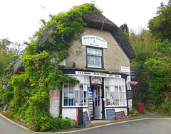 The Bat's Wing (Sandra Leidholdt) Tags: old uk greatbritain england cold building english shop golden vines unitedkingdom britain landmark structure isleofwight greenery thatch british tearoom teatime teahouse giftshop tearooms iow oldenglish godshill englishheritage thatchroof climbingvines sandraleidholdt batswing oldenglishtearooms churchhollow sandyleidholdt englishheritagebuilding id392765