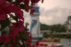 Lighthouse (Focus on Flowers)