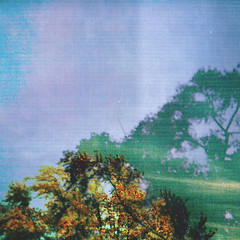March 2014 (SunnyDelToro) Tags: chicago color tree texture film nature holga lomo lomography exposure grain young double dope