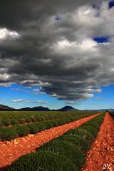 Clouds on Lavander Fields (Photos PL&Us) Tags: art nature clouds ciel contraste lavander fields provence nuage paysage lavande couleur champ ocre valensole alpeshauteprovence