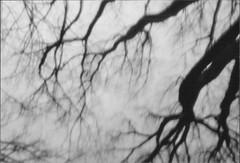 Osterseen xi (gruss.mir) Tags: film 35mm print scan pinhole xp2 osterseen 2016