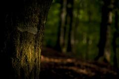 Spot! (Asa Lundqvist) Tags: light summer nature forest landscape evening sweden natur spot smland skog sverige suecia sommar landskap naturleza smlndskahglandet
