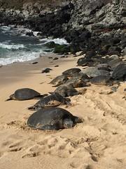 IMG_0496 (Ourisman Travel) Tags: hawaii maui wailea hotelwailea