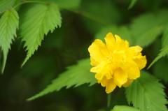 Flowers in spring () Tags: pentax takumar sony 55mm f18 smc a57 57
