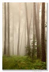 La-magia-del-bosco (Roberto Cariolato) Tags: natura atmosfera bosco sottobosco