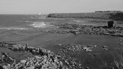 View to St Mary's Island, B&W, Seaton Sluice, Northumberland, England, UK, 5/2016 (SteveT0191) Tags: uk england bw flickr northumberland seatonsluice geolocated