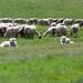 I due pastori