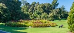 DSC_5074-HDR (Scottmh) Tags: gardens nikon royal australia melbourne victoria botanic d7100