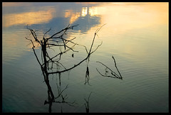 Branch at Sunset: Lake George (hamsiksa) Tags: water reflections florida lakes silhouettes sunsets lakegeorge rivers stjohnsriver centralflorida subtropicpeninsula
