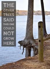 Tree Inspiration (petridish38) Tags: inspiration inspirational motivation motivational tree river