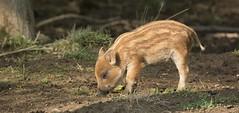 Hogging The Spotlight (KHR Images) Tags: