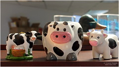 Three Pink Snouts (Mark Turnauckas) Tags: cattle cows moo herd bovines