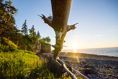 Driftwood (kevin_kornelsen) Tags: ocean blue nature water outdoors nikon seascapes scenic d3100